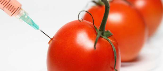 The Debate on Genetically Manipulated Food